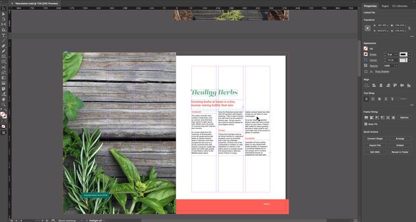 Software Adobe Indesign CC 2019 Full Version Crack